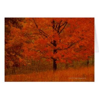 Cartes Arbre d'automne avec le feuillage rouge