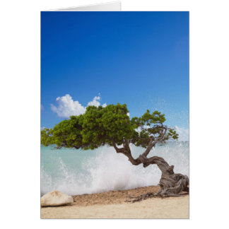 Cartes Arbre de Divi Divi, plage d'Eagle, Aruba, des