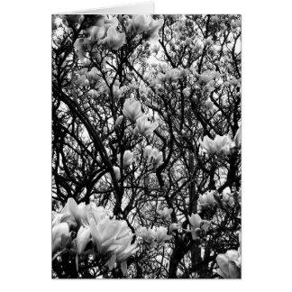 Cartes Arbre de magnolia