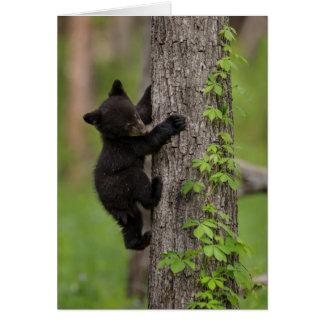 Cartes Arbre d'escalade de CUB d'ours noir