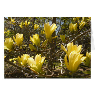 Cartes Arbre jaune de magnolia