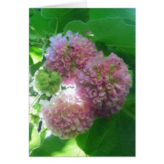 Cartes Arbre tropical d'hortensia