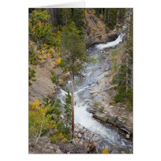 Cartes Arbres 14 de rivière et de tremble de Provo