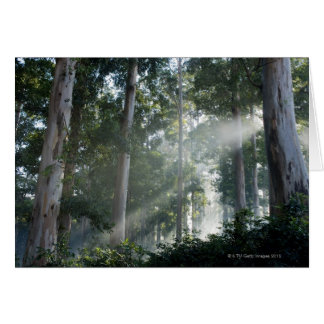 Cartes Arbres de gomme (eucalyptus) dans la forêt