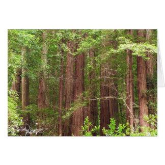 Cartes Arbres de séquoia au monument national en bois de
