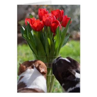 Cartes Arrêtez et sentez les tulipes