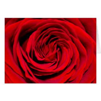 Cartes Arrière - plan de rose rouge