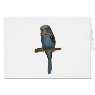 Cartes Art bleu de perruche