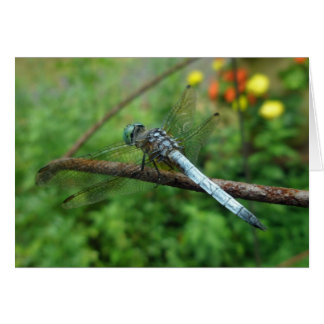 Cartes Articles coordonnés de libellule bleue de Dasher