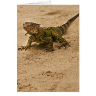 Cartes Aruba, lézard sur le sable
