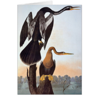 Cartes Audubon : Anhinga