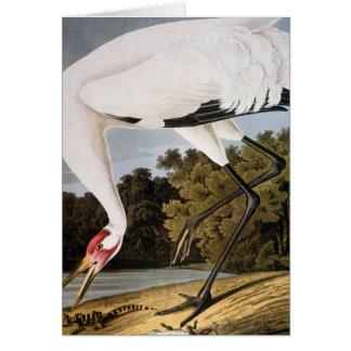 Cartes Audubon : Grue de huée
