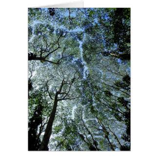 Cartes Auvent hawaïen de forêt tropicale