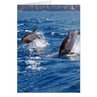Cartes Aventure de dauphin