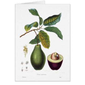 Cartes Avocat (Persea americana)