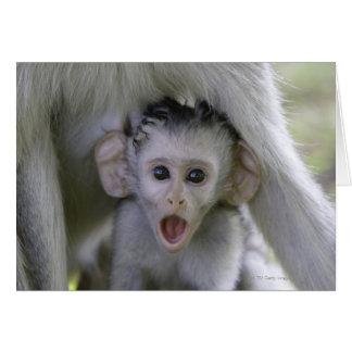 Cartes Babouin de bébé sous sa mère