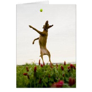 Cartes Balle de tennis contagieuse de chien dans l'entre