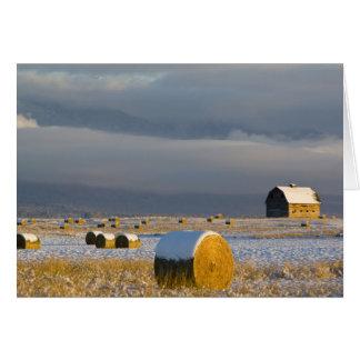 Cartes Balles rustiques de grange et de foin après une