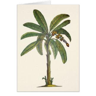 Cartes Bananier botanique