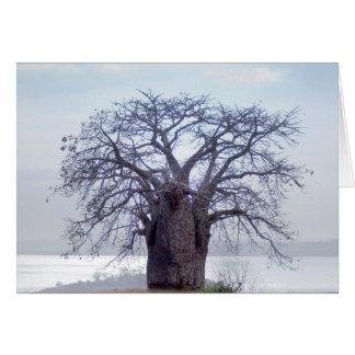 Cartes Baobab (Adansonia Digitata), Luanda