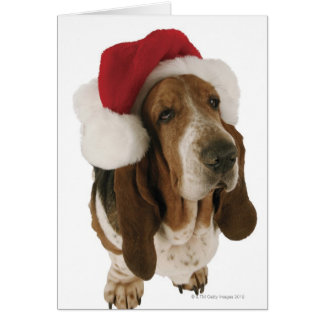 Cartes Basset Hound dans le casquette de Père Noël
