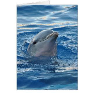 Cartes Beau dauphin
