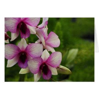 Cartes Beau Phalaenopsis