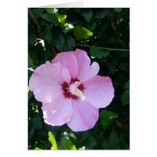 Cartes Beauté botanique prête à éclairer toute occasion !