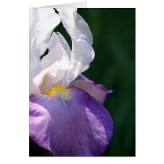 Cartes Beauté d'iris