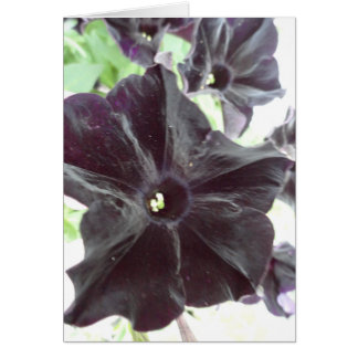 Cartes Beauté noire