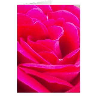 Cartes Beauté rose