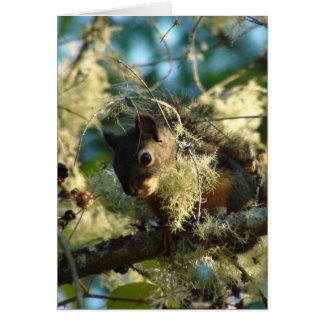 Cartes Bébé 2009 d'écureuil