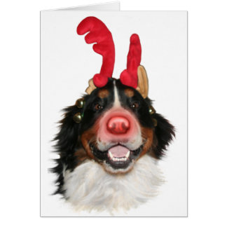Cartes Bernese Roodolph