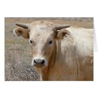 Cartes Bétail blancs du charolais de grands yeux - blanc