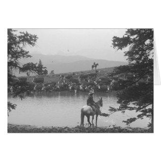 Cartes Bétail par un étang avec deux cowboys
