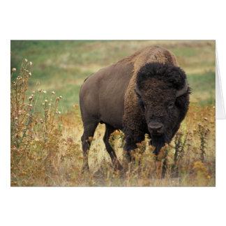 Cartes Bison