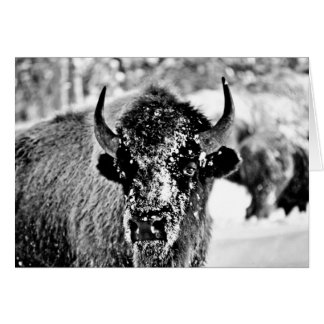 Cartes Bison givré de Yellowstone