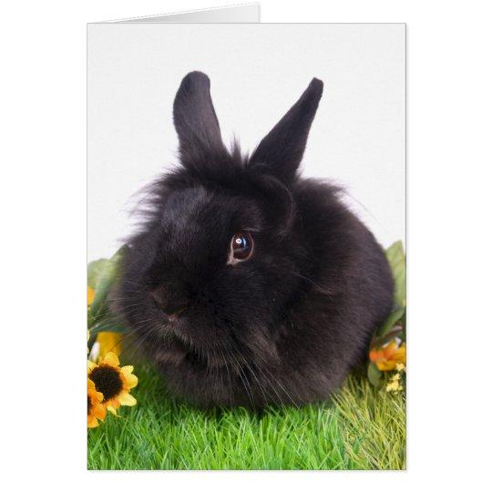 Cartes black rabbit