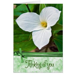 Cartes Blanc de Trillium