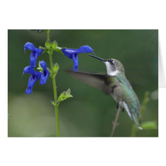 Cartes Bleu 2 de saphir de salvia d'oiseau de ronflement