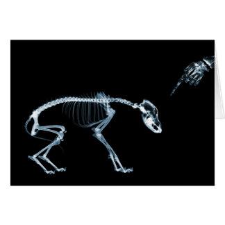 Cartes Bleu de chien de squelettes de rayon X mauvais