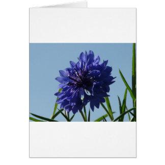 Cartes Bleuets bleus