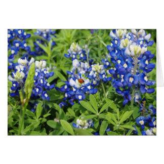 Cartes Bluebonnets de Texas