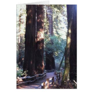 Cartes Bois de Muir