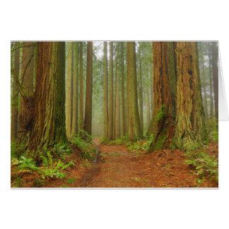 Cartes Bolinas Ridge