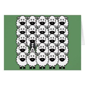Cartes Border collie Lisse-Enduit chez les moutons