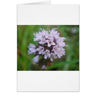 Cartes Boule de floraison avec lilas des floraisons