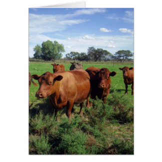 Cartes Brown_Cow_Field, _