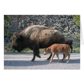 Cartes Buffalo de Yellowstone