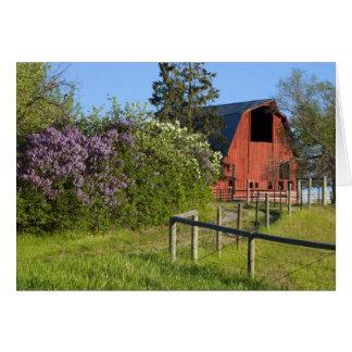 Cartes Buissons lilas en fleur et pies dans les arbres